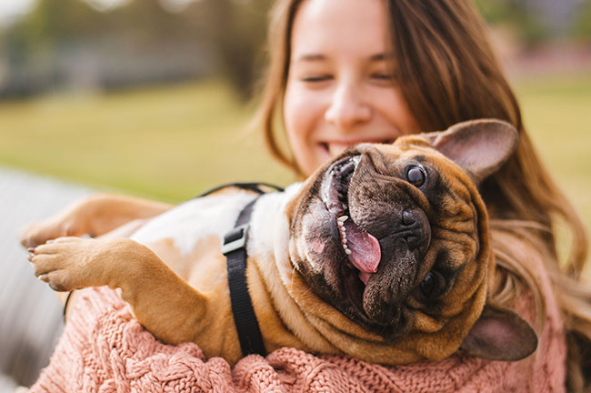 As in the case of medical cannabis for humans, there are numerous anecdotal reports on the benefits of CBD for pets, but there has been little research done to support these claims and pet advocates are calling for increasing the body of evidence.