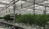 One of the grow rooms at CannTrust's production facility in the Niagara region.