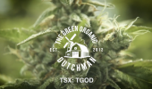 The Green Organic Dutchman is a Mississauga-based company cultivating organic-certified cannabis.