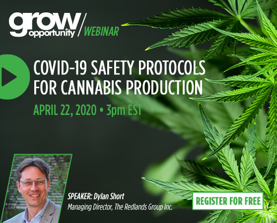New webinar on COVID-19 cannabis production safety